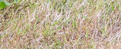 Vedligehold græsplænen